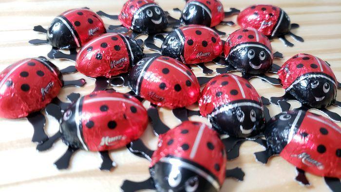 集まったてんとう虫チョコ